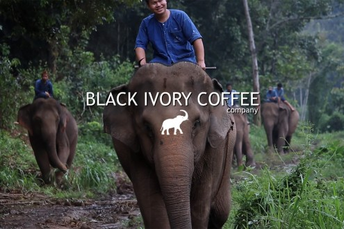 Black Ivory Coffee
