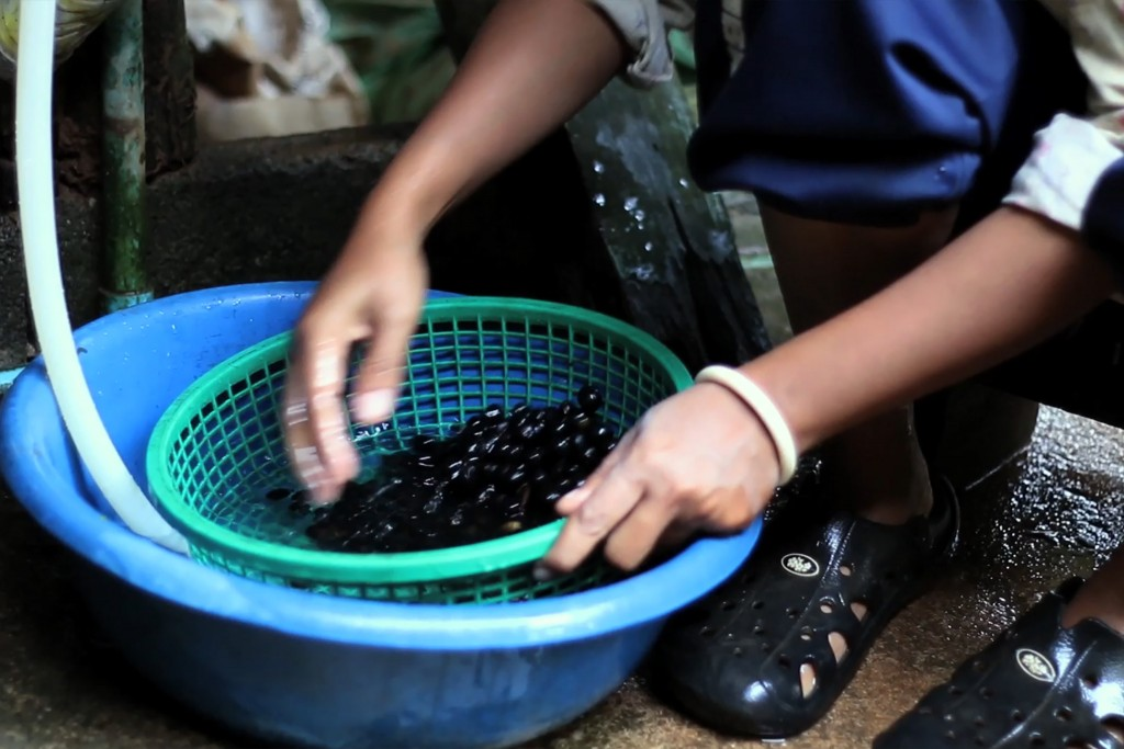 Black Ivory Coffee Washing